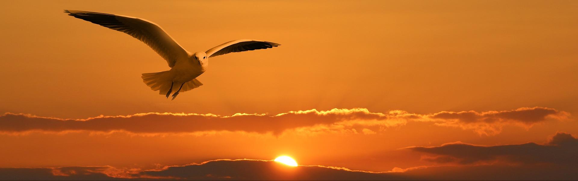 Freedom Gull